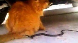 Змея против хвоста смотреть видео прикол - 1:00