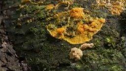 Смотреть Как растут грибы