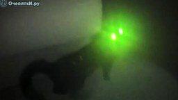 Смотреть Инопланетный кот