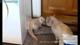 Кошачья борцовская стойка смотреть видео прикол - 0:27