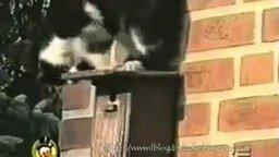 Смотреть Смешные кошки
