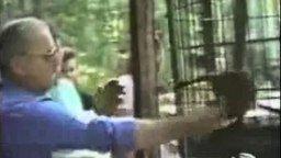 Животные и люди смотреть видео прикол - 1:16