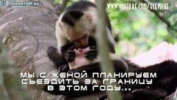 Обезьяна-стоматолог смотреть видео прикол - 1:08