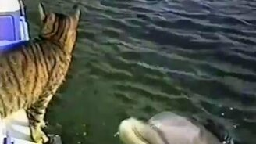 Смотреть Кошка и дельфины