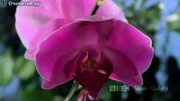 Цветы распускаются смотреть видео - 1:51