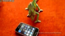 Хамелеон против ай-фона смотреть видео прикол - 0:30