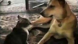 Смотреть Падение кошек