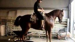 Смотреть Лошадь танцует