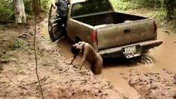 Смотреть Упала в грязь