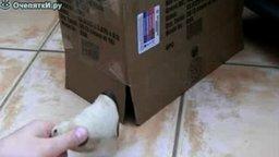 Смотреть Кот в коробке и мышка