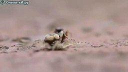 Смотреть Поединок паука и муравья