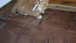 Смотреть Отучает малыша от курения