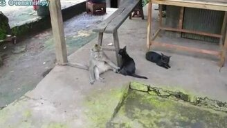Смотреть Обезьяна и кошка