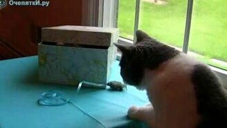 Котёнок из коробки смотреть видео прикол - 1:26