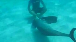 Смотреть Нехороший дельфинчик