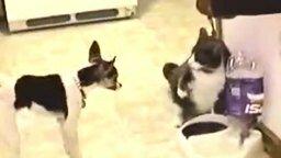 Стойкая собачонка смотреть видео прикол - 0:59