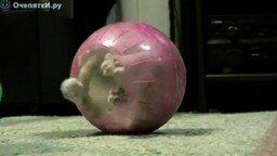 Котёнок в шаре смотреть видео прикол - 2:49