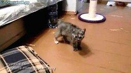 Храбрый котёнок смотреть видео прикол - 1:06