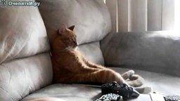 Смотреть Кот за просмотром телевизора