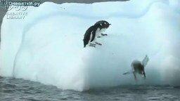 Пингвины на айсберге смотреть видео прикол - 1:27