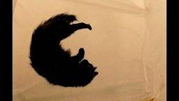 Смотреть Кот в невесомости