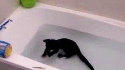 Кот в ванне смотреть видео прикол - 1:46