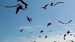 Расчётливые чайки смотреть видео прикол - 1:21