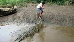 Смотреть Кормление крокодила с рук