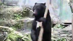 Кунг-фу медведь смотреть видео прикол - 1:29