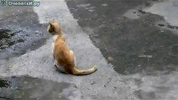 Смотреть Птичка дразнит кота
