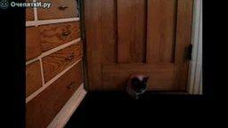 Импровизация кота-толстяка смотреть видео прикол - 0:20