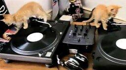 Котята ди-джеи смотреть видео прикол - 0:37