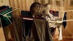 Смотреть Кот крушильщик