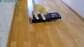Котёнок и коробка смотреть видео прикол - 1:08