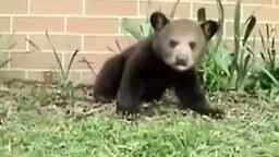 Медвежонок чихает смотреть видео прикол - 0:24