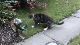 Кошка и игрушка-лягушка смотреть видео прикол - 2:36