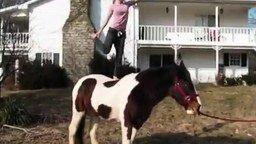 Фото с лошадью смотреть видео - 1:44