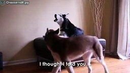 Разговор по-собачьи смотреть видео прикол - 2:07