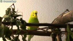 Смотреть Говорящий попугайчик