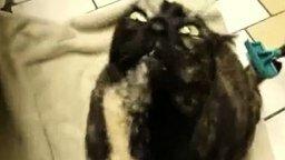 Кот-демон смотреть видео прикол - 0:43