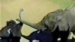 Слонёнок и страус смотреть видео прикол - 0:20
