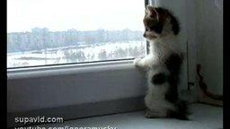 Котёнок у окна смотреть видео прикол - 1:30