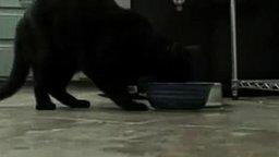 Кот ирландец смотреть видео прикол - 0:14