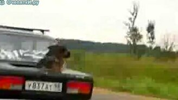 Смотреть Пёс в багажнике