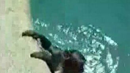 Ныряющая обезьянка смотреть видео прикол - 0:23