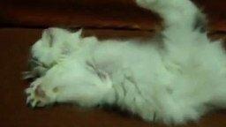 Котёнок-космонавт смотреть видео прикол - 0:28