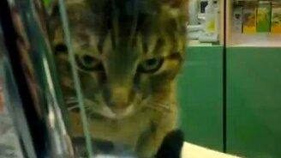 Смотреть Кот аптекарь