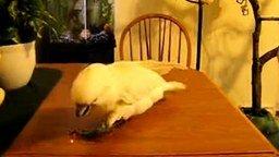 Попугай и лазер смотреть видео прикол - 1:19