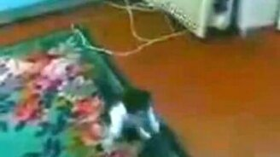 Котёнок против пакета смотреть видео прикол - 0:42