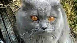 Злющий кот смотреть видео прикол - 2:26